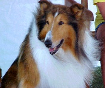 Lassie smiles for the camera