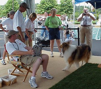 Lassie turns in a circle
